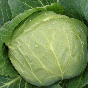 Диета на капустном салате