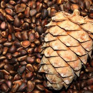 Калорийность кедрового ореха в скорлупе очищенного и обжаренного