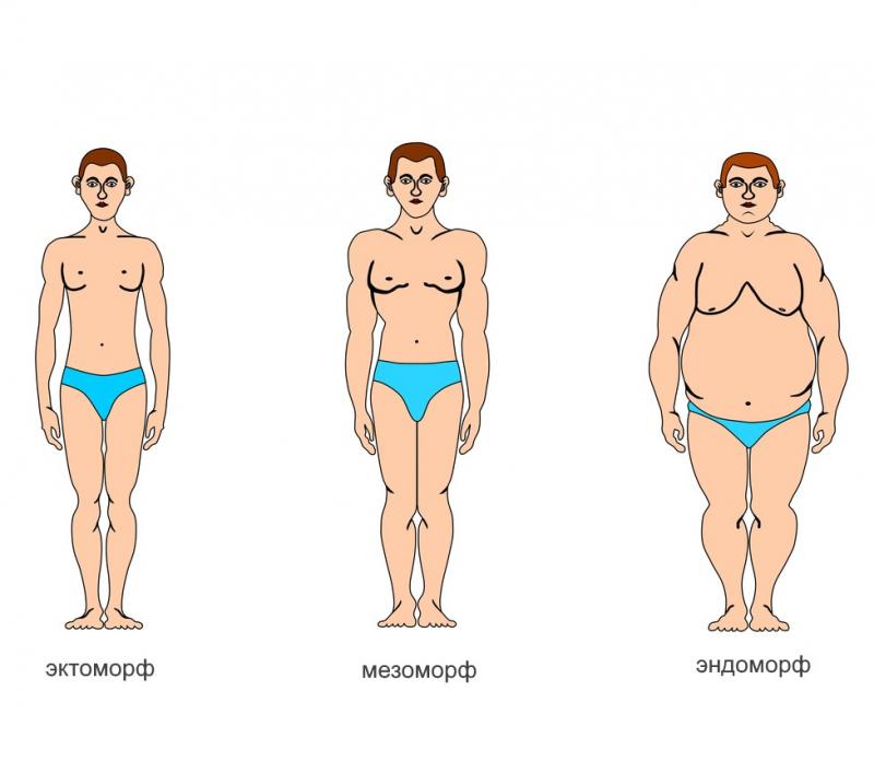 виды телосложения у мужчин названия картинки наблюдается чаще людей