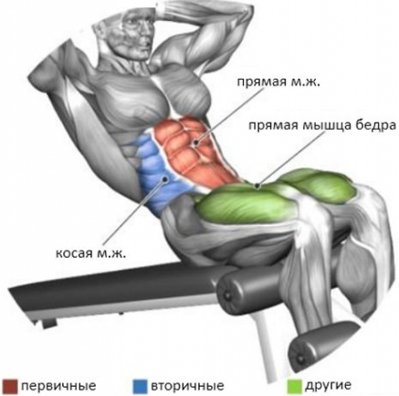 Скамья для пресса и спины комплекс упражнений